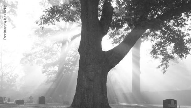 CDU und Grüne: Koalition aktiv in der AG Friedhof Im Mai hat der Ausschuss für Ausschuss für Umwelt Planung und Bauen die Gründung einer eigenen Arbeitsgruppe (AG) Friedhof beschlossen. Sie […]